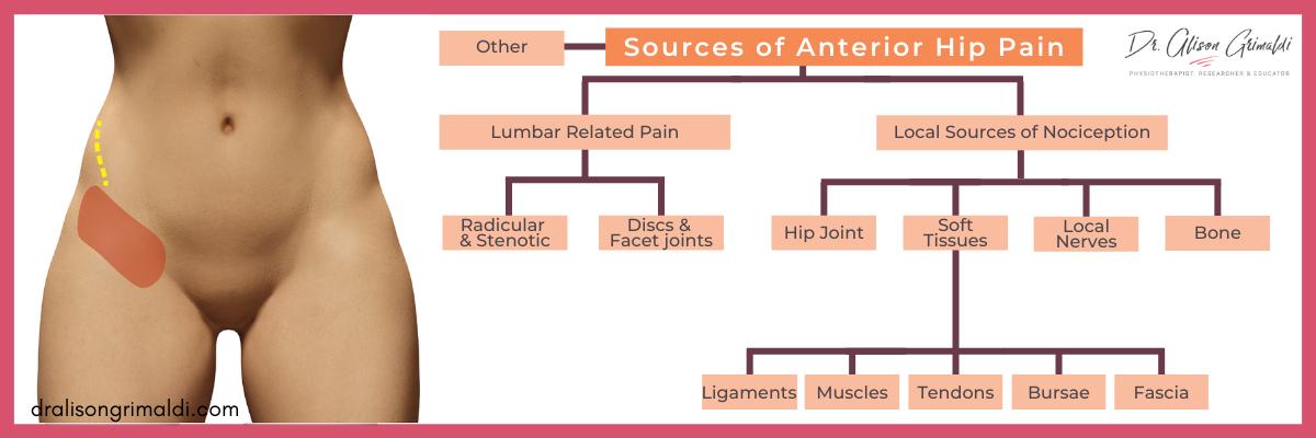 Blog Graphic - Sources of Anterior Hip P