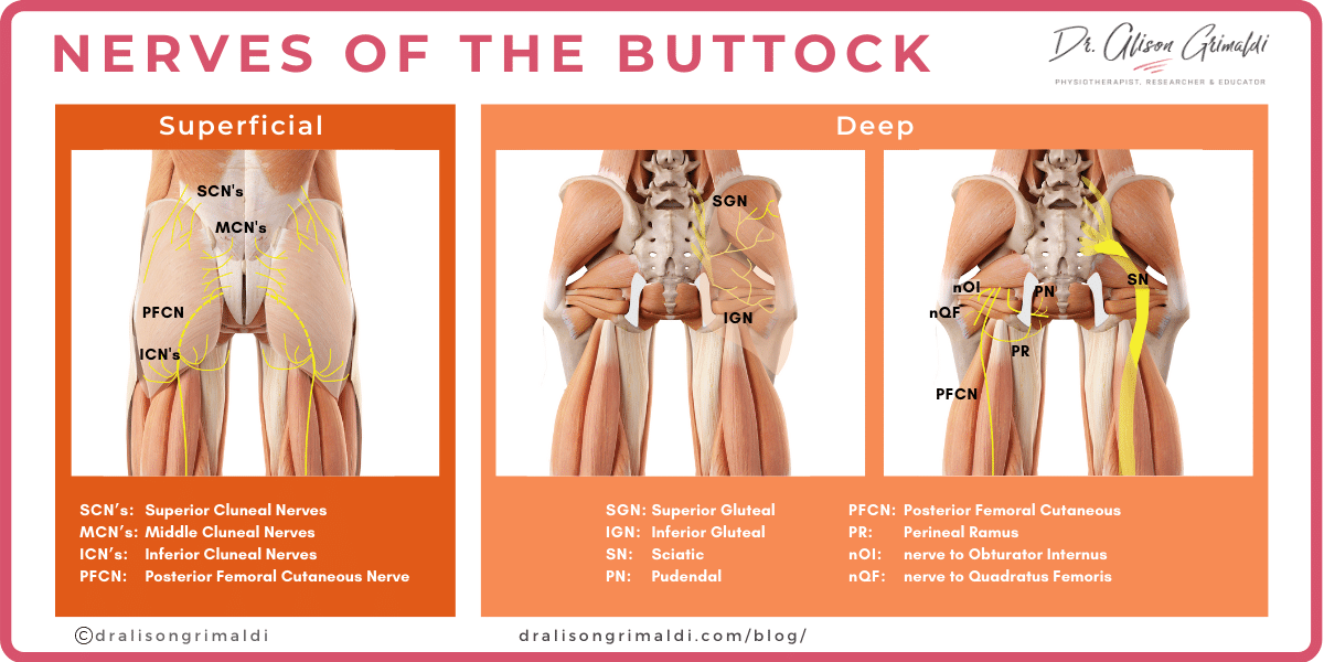 Nerves-of-the-Buttock_dralisongrimaldi_blog