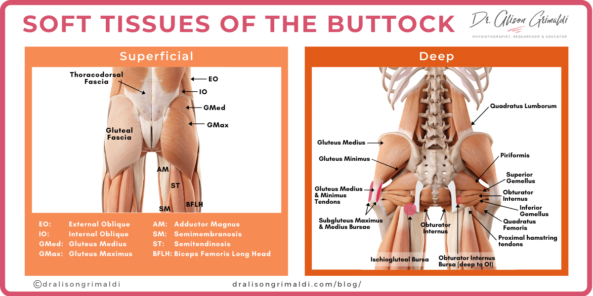 Soft-Tissues-of-the-Buttock_dralisongrimaldi_buttock-pain-blog